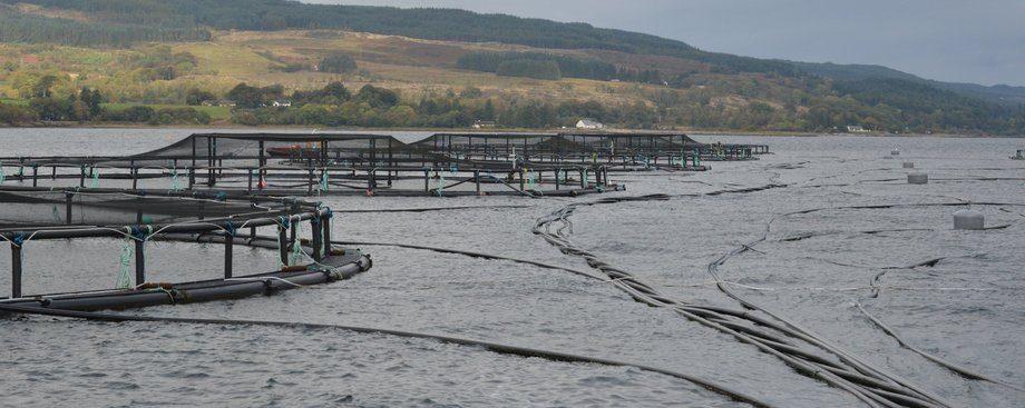 Foto: Norsk Fiskeoppdrett