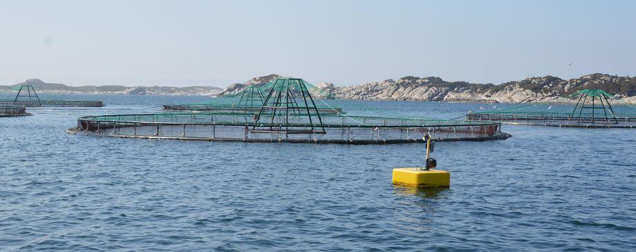 Illustrasjonsfoto merd. Foto: Norsk Fiskeoppdrett.
