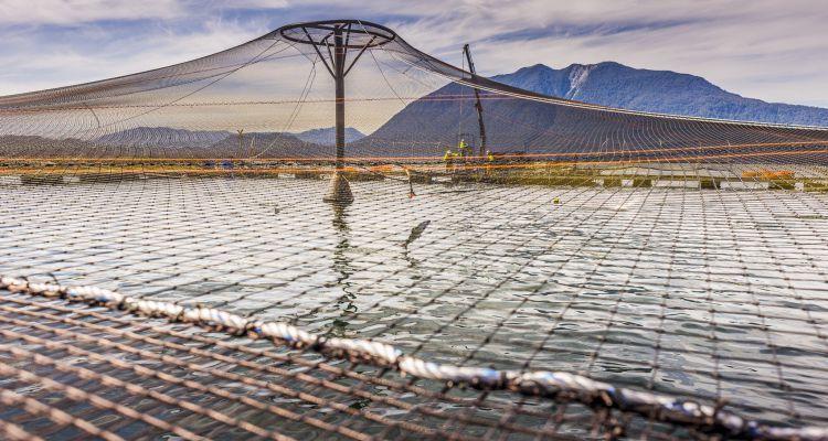 Chilenske oppdrettere søker ASC- godkjenning. Foto: Marine Harvest Chile