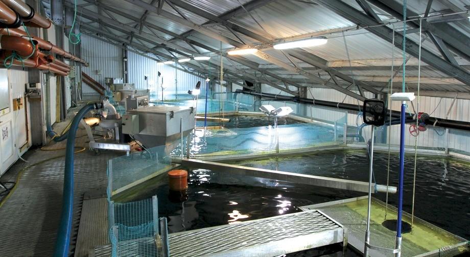 Fisketanker for smolt inne på pilotanlegget Smøla Klekkeri og Settefisk. Clarity har hatt tett kontakt med Innovasjon Norge gjennom hele prosessen fra nyskaping til internasjonalisering. Foto: Vegar Sommerstad Haugland.