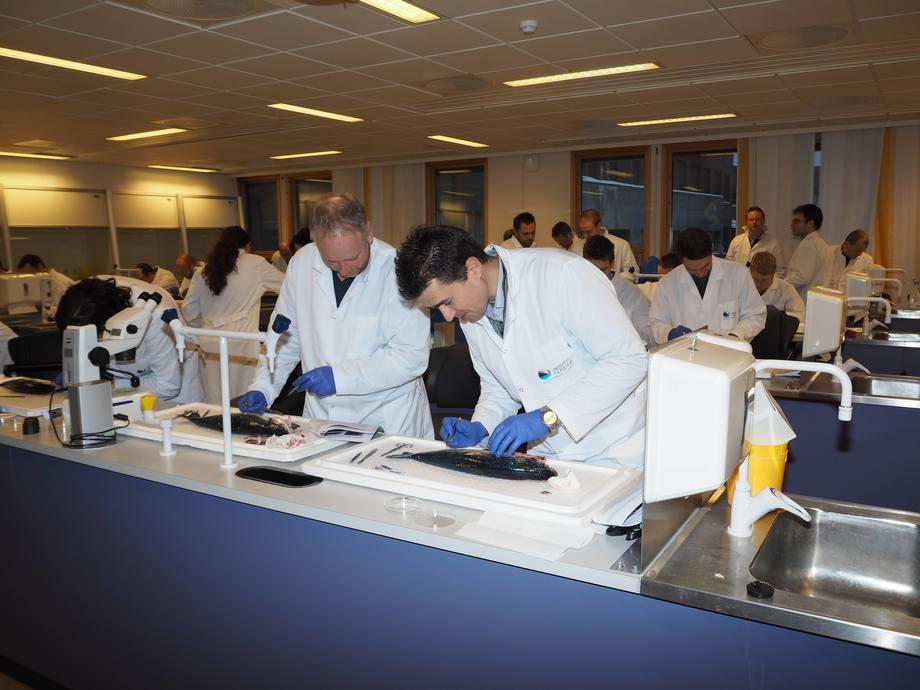 Kjell Arne Sætre og Hasse Teigen  dissekerer fisk for å lære om anatomi, indre organer og dens funksjoner, under den  første samlingen. Fotp: Viktor Solbakken