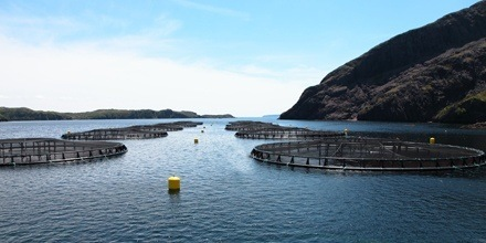 A salmon farm in Newfoundland and Labrador, where AKVA expects significant growth for the industry.