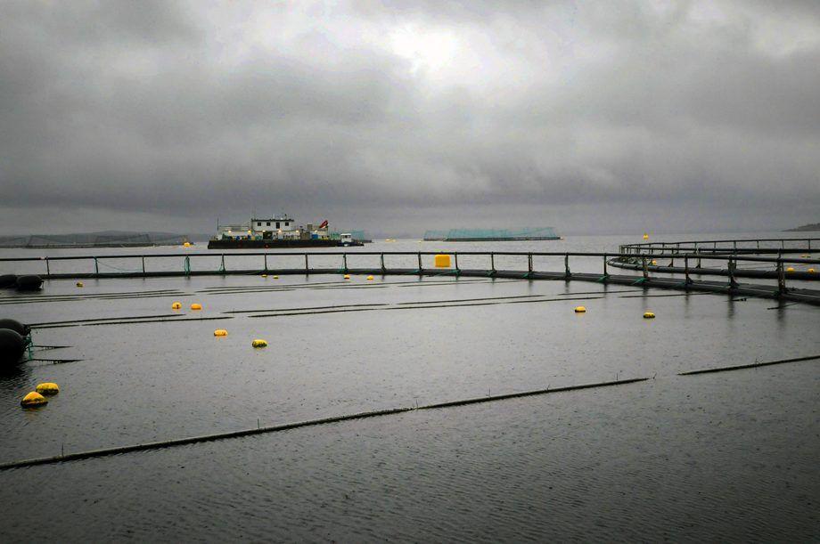 Lerøy Seafood Group slaktet nesten 9000 tonn mindre tredje kvartal.  illustrasjonsfoto.