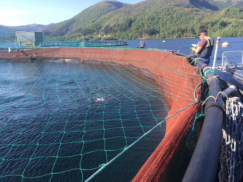 På lokaliteten til Statt Torsk er det for tiden ingen fisk satt ut i sjøen, men selskapet har plan om å sette ut ny fisk til våren. Her ser du driftsleder i Statt Torsk Leif-Ronny Rætta på merdkanten. Foto: Statt Torsk.