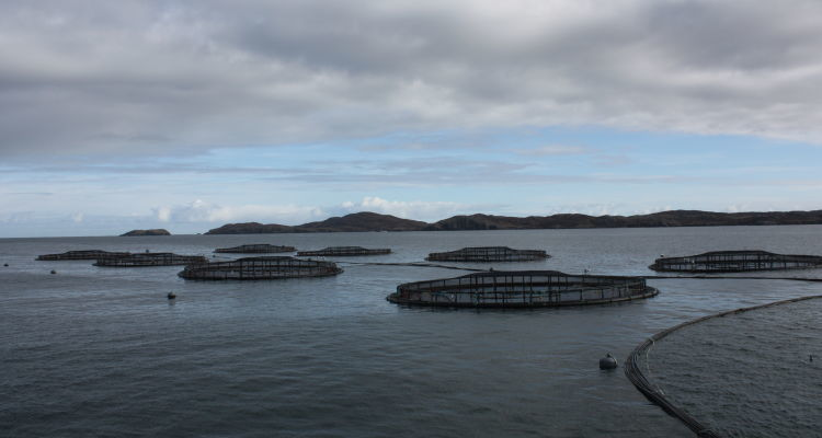 An SSC farm on Loch Roag. A sample of one SSC fish was found to have exceeded emamectin residue limits. Photo: Rob Fletcher.