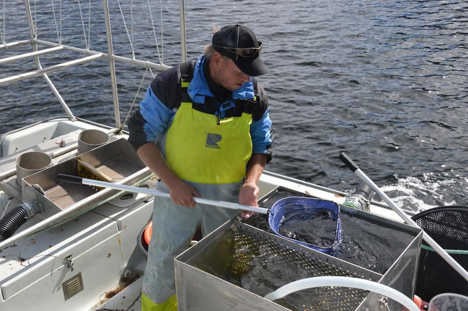 Fiskeren Hallvard Godøy, er fornøyd med dagens fangst som han skal levere til Bolaks. (bildet er tatt fra fisket i fjor) Foto: Therese Soltveit.