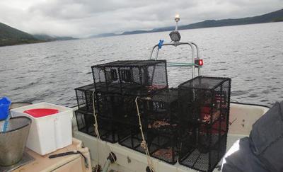 Kontroll av leppefisk-teiner. Foto: Fiskeridirektoratet.