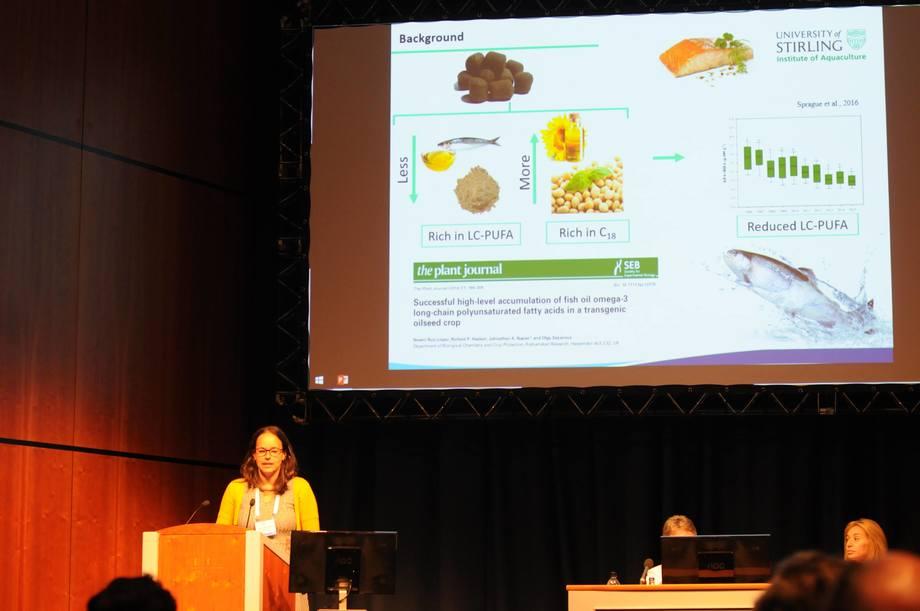 Mónica Betancor mener genmodifisert camelinaolje kan bli en god og trygg erstatter for fiskeolje i fôret.