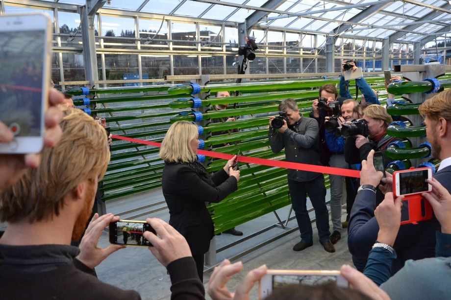 Næringsminister Monica Mæland klipper snoren under den offisielle åpningen av algepiloten. Foto: Magnus Petersen.