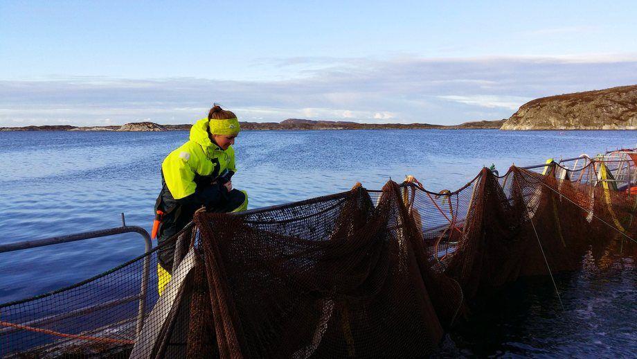 Veterinær Karoline Skaar Amthor ønsker å få optilmalisert bruken av rensefisk i laksemerdene. Foto: Øystein Andreassen.