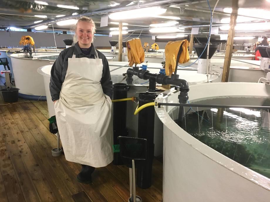 DIP-programmet finansieres av Nærings- og fiskeridepartementet og ledes av DOGA i samarbeid med Norges forskningsråd og Innovasjon Norge. Tjelbergodden Rensefisk er en av aktørene som får støtte. Foto: Tjelbergodden Rensefisk
