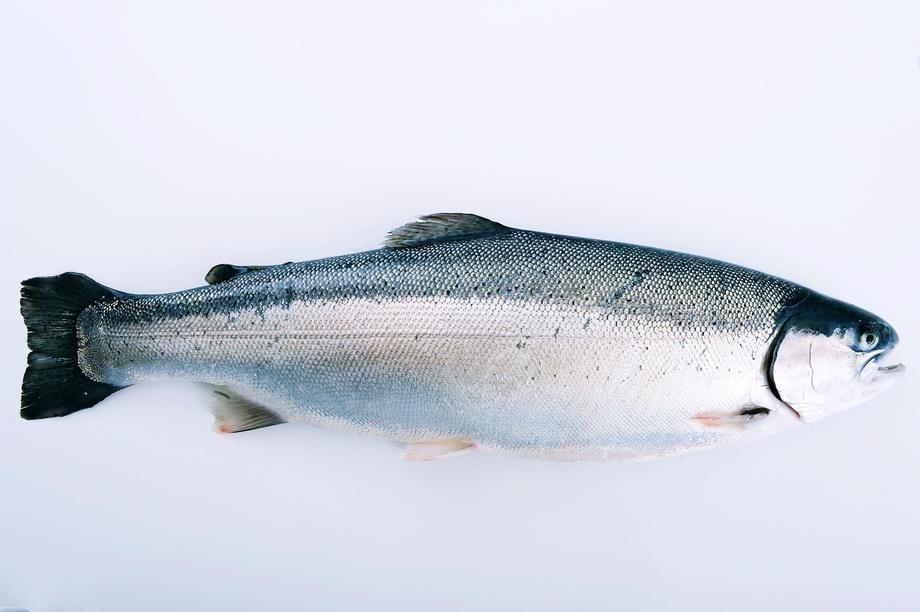 Det ble en kraftig oppsving for lakseeksporten. Foto: Norges sjømatråd