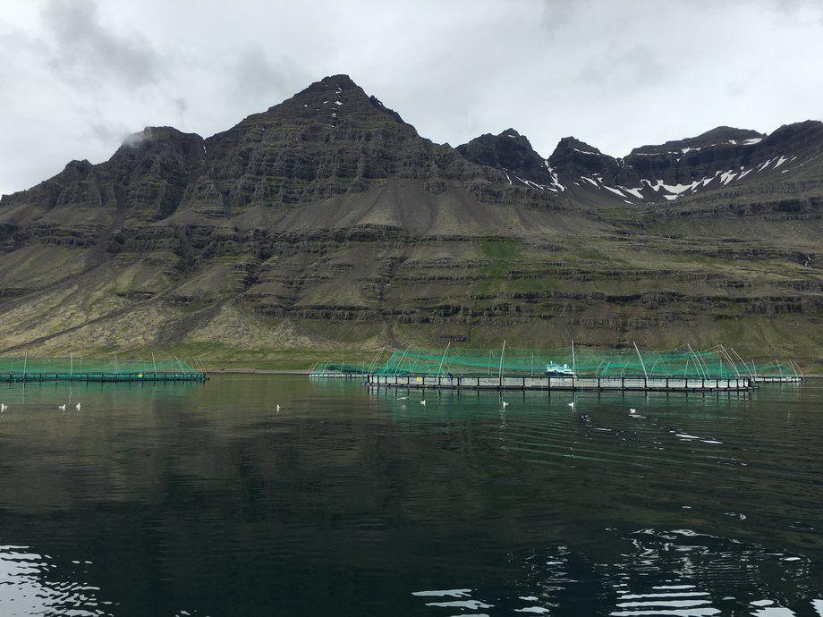 De to islandske selskapene lurer på om de skal ha lakser sammen. Foto: Ice Fish Farm