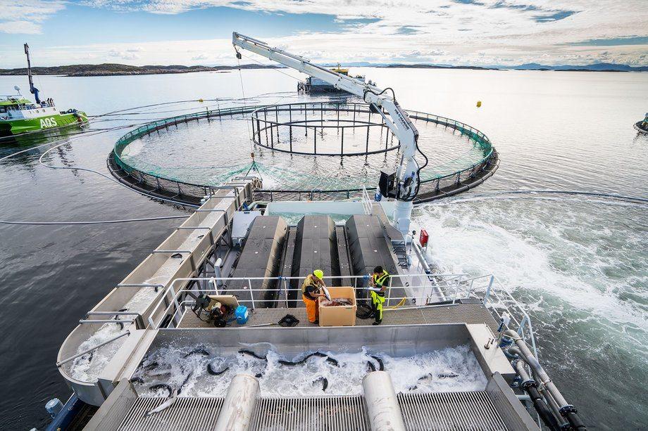 Fjoråret ble et bra år for Hydrolicer som totalt leverte 52 linjer i løpet av 2016, fordelt på Norge, Irland, Skottland og Færøyene. Her ser du Hydroliceren i drift. Foto: Steinar Johansen.
