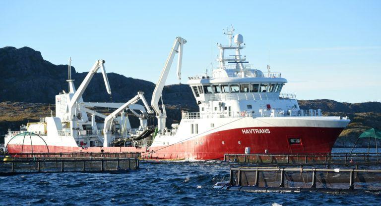 Etter ombyggingen vil HAVTRANS kunne avluse opp mot 125 tonn laks i timen, lasting og lossing medregnet. Foto: Tom Lysø.