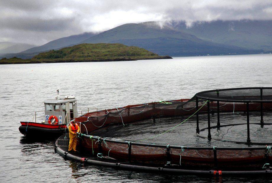 Marine Harvest-anlegg i Skottland. Foto: Pål Mugaas Jensen