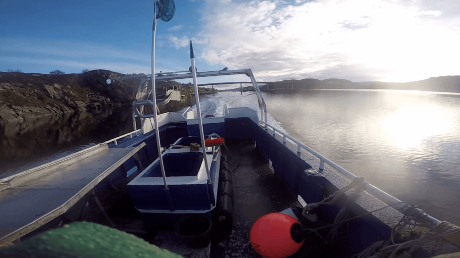 Lumpfish er spesialbygget for rognkjeksfiske. Foto: Skjerneset Fisk AS