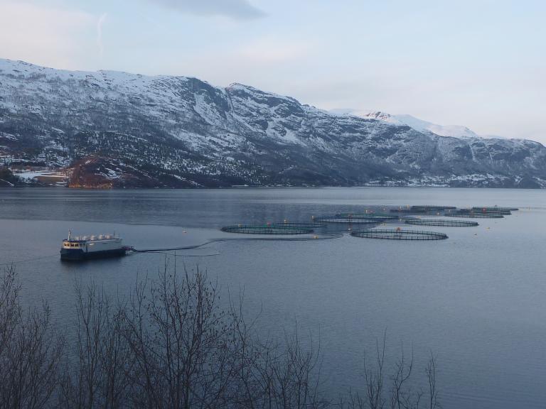 Gratanglaks er også rammet, bildet viser lokaliteten Skarbergvika som er nabolokaliteten til Åmundsvika som er rammet. Foto: Gratanglaks.
