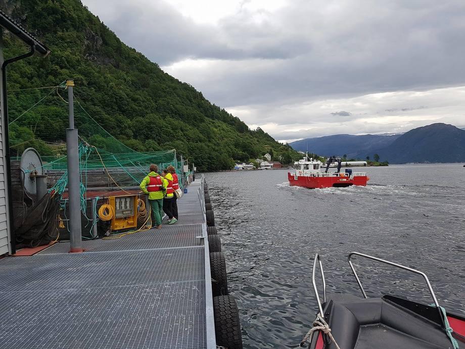 Hardanger Akvasenter har hatt opptil 200 besøkende på merdkanten daglig, sommeren 2017. Foto: Hardanger Akvasenter