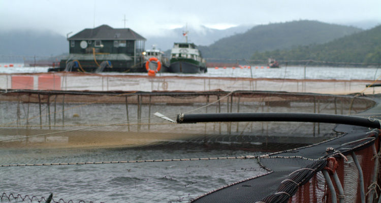 Moves by Los Fiordos and Aquachile are consolidating ownership in Chile's salmon farming industry. Photo: Salmonexpert
