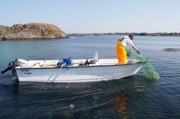 Fangst av leppefisk. Foto: Fiskeridirektoratet.