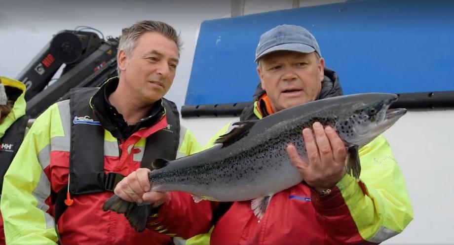 Tareq Taylor på merdkanten hos Steinvik Fiskefarm sammen med Alex Vassbotten. Foto: Skjermdump fra Nordic Cookery