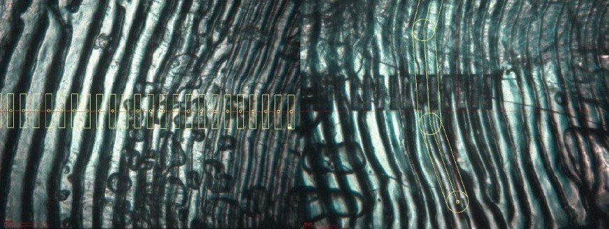 Skjermbilde av tegnede laserabladeringsbaner. Bildet til venstre viser punktablade. Foto: Veterinærinstituttet