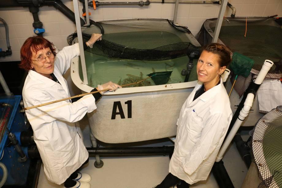 F.v. Unni Grimholt og Helena Hauge på Fiskelaboratoriet, som Veterinærinstituttet deler med NMBU Veterinærhøgskolen. Foto: Mari M. Press.