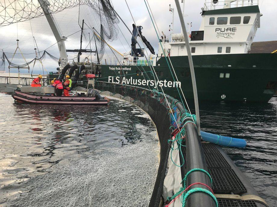 Avlusning før jul. Foto: Smøla Klekkeri og Settefisk.