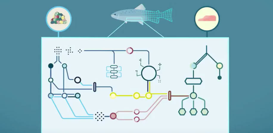 Digital salmon ved NMBU skal begrense dyreforsøk. Foto: Visual Lab