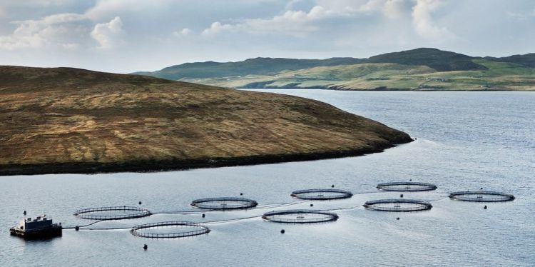 One of Grieg's sites in Shetland, where healthier smolts means fish survival has improved.