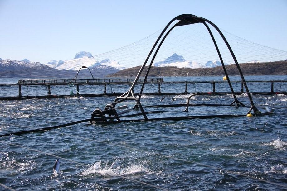 Illustrasjonsfoto: Marine Harvest merd.