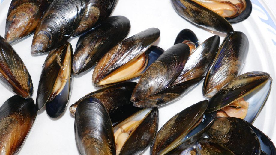 Researchers at Glasgow Caledonian University discovered extremely low levels of HEV in mussels. Photo: FFE