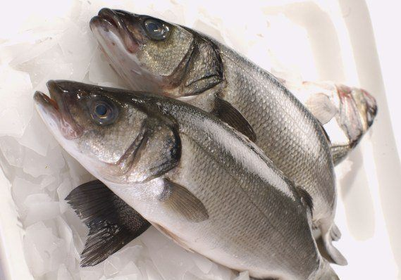 Aqualife's Portugal-based fish welfare service will focus on farmed sea bass, pictured, and bream. Photo: 21Food
