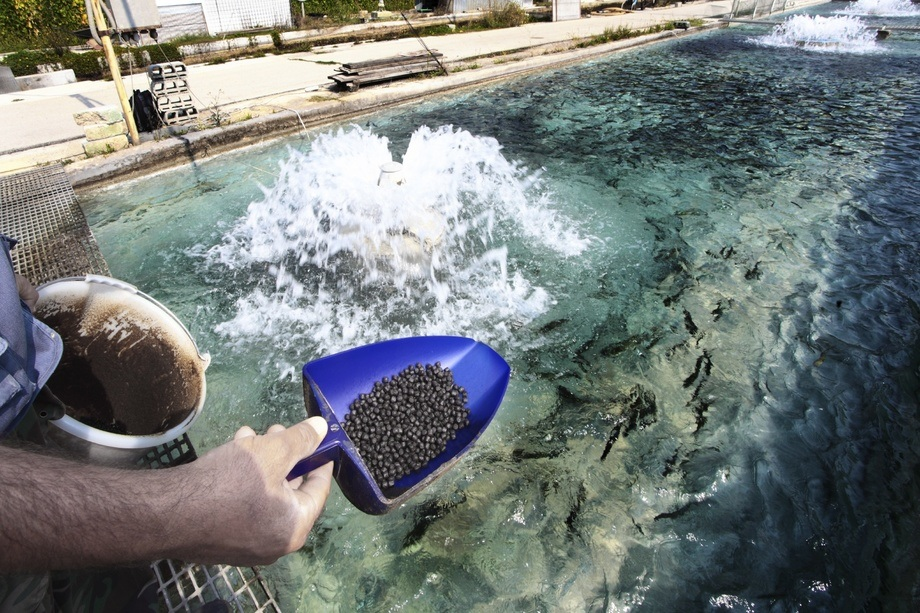 Scientists at Dalian University of Technology in China suggested that fishmeal is helpful as a 'vehicle to promote the spread of antibiotic-resistant genes worldwide'. Photo: Library picture