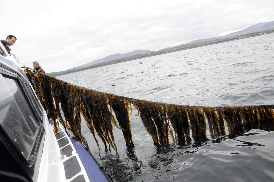 SAMS is a leading centre for seaweed research.