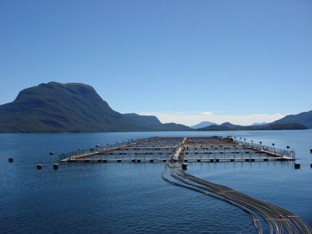 Chile's aquaculture sector harvested more than half a million tonnes up to May.
