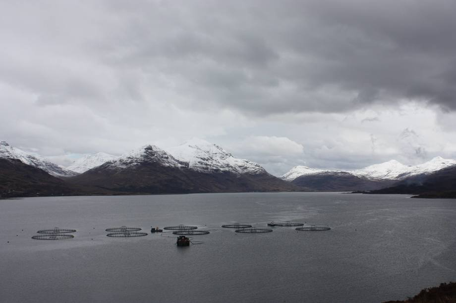 Marine Harvest Scotland's Loch Torridon site. MH Scotland harvested 18,500 tonnes of salmon in Q2. Image: Rob Fletcher