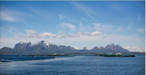 Cermaq's fish survival rate is 94.8 per cent in Norway. Image: Cermaq.