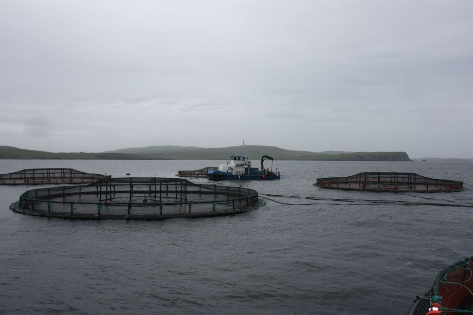 A Scottish Sea Farms site in Shetland. SalMar owns 50 per cent of Norskott Havbruk, which in turn owns 100 per cent of Scottish Sea Farms. Image: Rob Fletcher.