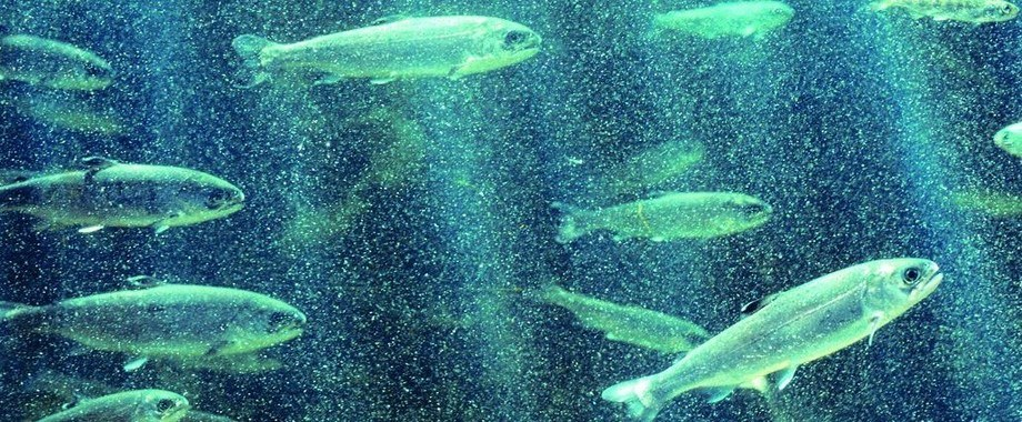 Huon Aquaculture has grown to become second largest salmon producer in Tasmania.