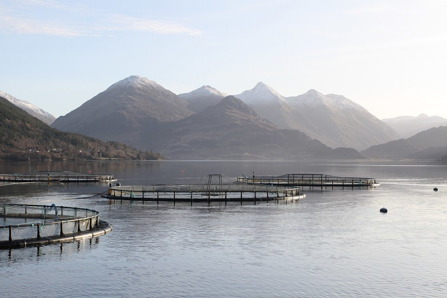 The government says it wants to 'strike the right balance' between the benefits of the aquaculture industry while managing potential environmental impacts.