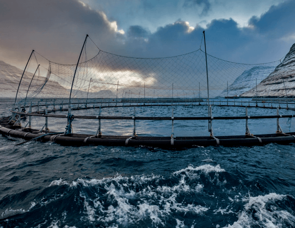 Earlier this month Bakkafrost said it was to harvest one million fish as a precautionary measure. Now the pathogenic ISA virus has been confirmed.