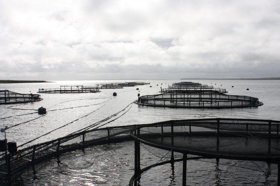 Swedish court halts three fish farms - FishFarmingExpert.com