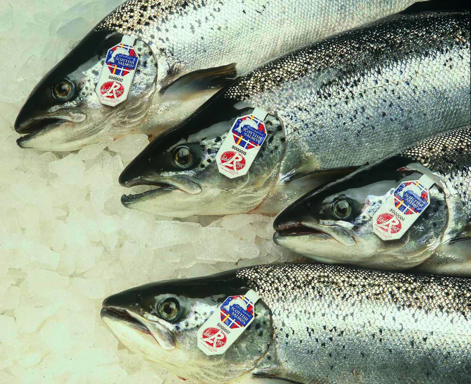 Aquaculture is now worth £620m a year to the Scottish economy, with Atlantic salmon accounting for 90 per cent of economic impact.