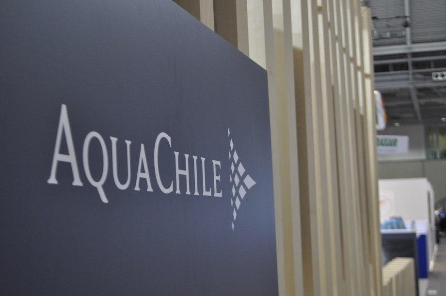 Foto referencial de Aquachile. Fuente: Daniella Balin, Salmonexpert.