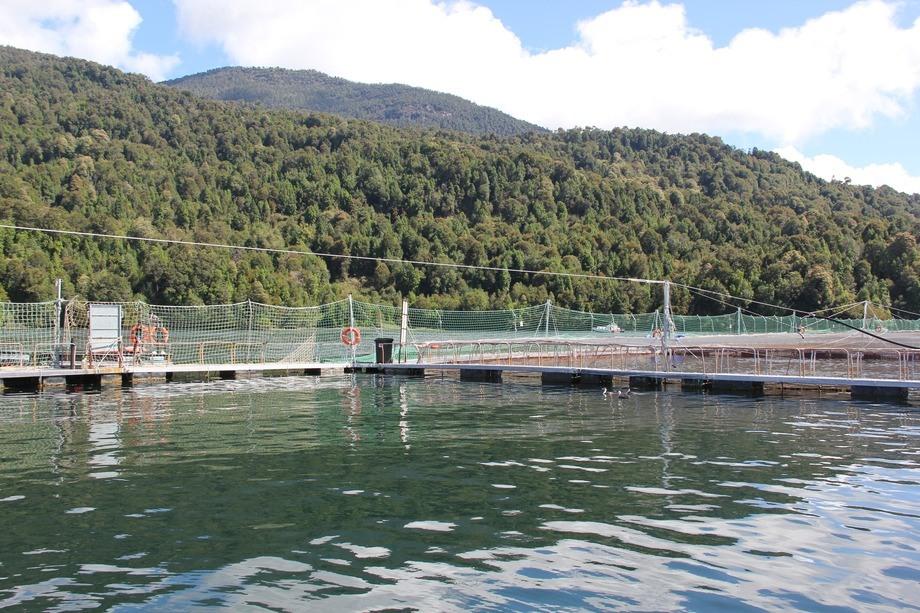 Foto referencial Centro de Cultivo. Fuente: Daniella Balin, Salmonexpert.