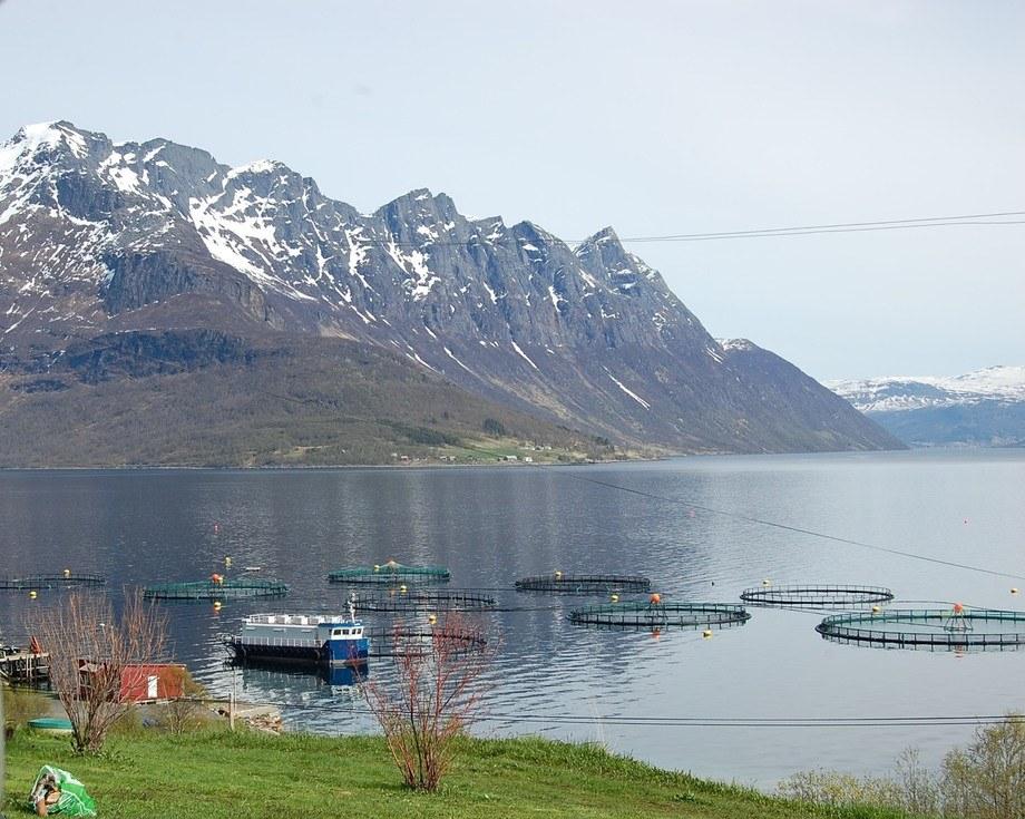 Imagen referencial de centro de cultivo de salmones en Noruega. Foto: Archivo Salmonexpert.
