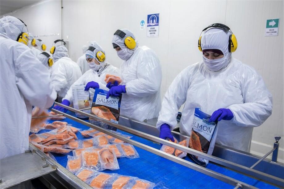 Planta de proceso de salmón en Magallanes. Foto: Asociación de Productores de Salmón de Magallanes.