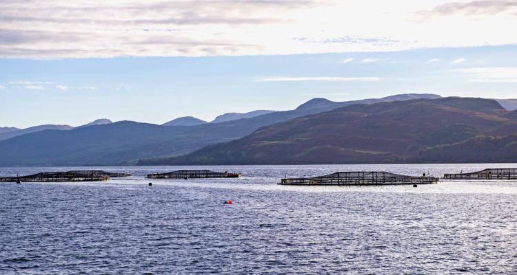 Las exportaciones de salmón escocés crecieron un 35% en valor y un 26% en volumen el año pasado. Foto: SSPO.